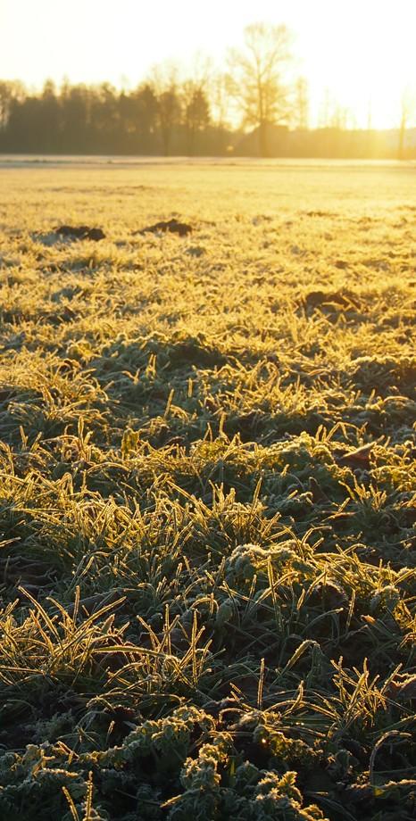Ein Spaziergang über tauige Wiesen zum Sonnenaufgang am Weihnachstmorgen 2014. krambeutel Die Manufaktur für Deine Wunschtasche München Stefanie Ramb