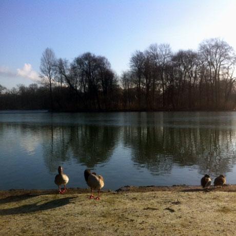 Morgens am Kleinhesseloher See, München, Englischer Garten